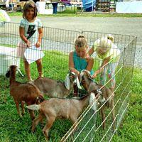 AGB goats