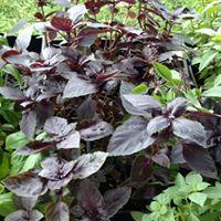 AGB herbs